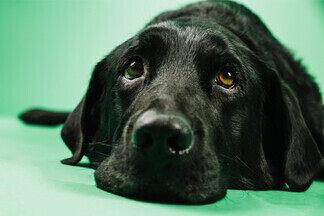 Уши, лапы, хвост — как понять, что вашему питомцу плохо? Ветеринар о симптомах, которые нельзя оставлять безвнимания