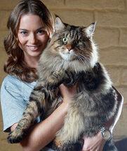 Мейн-кун: хорошего кота должно быть много!