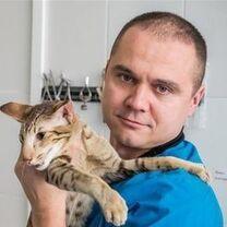 Домрачев Павел Владимирович