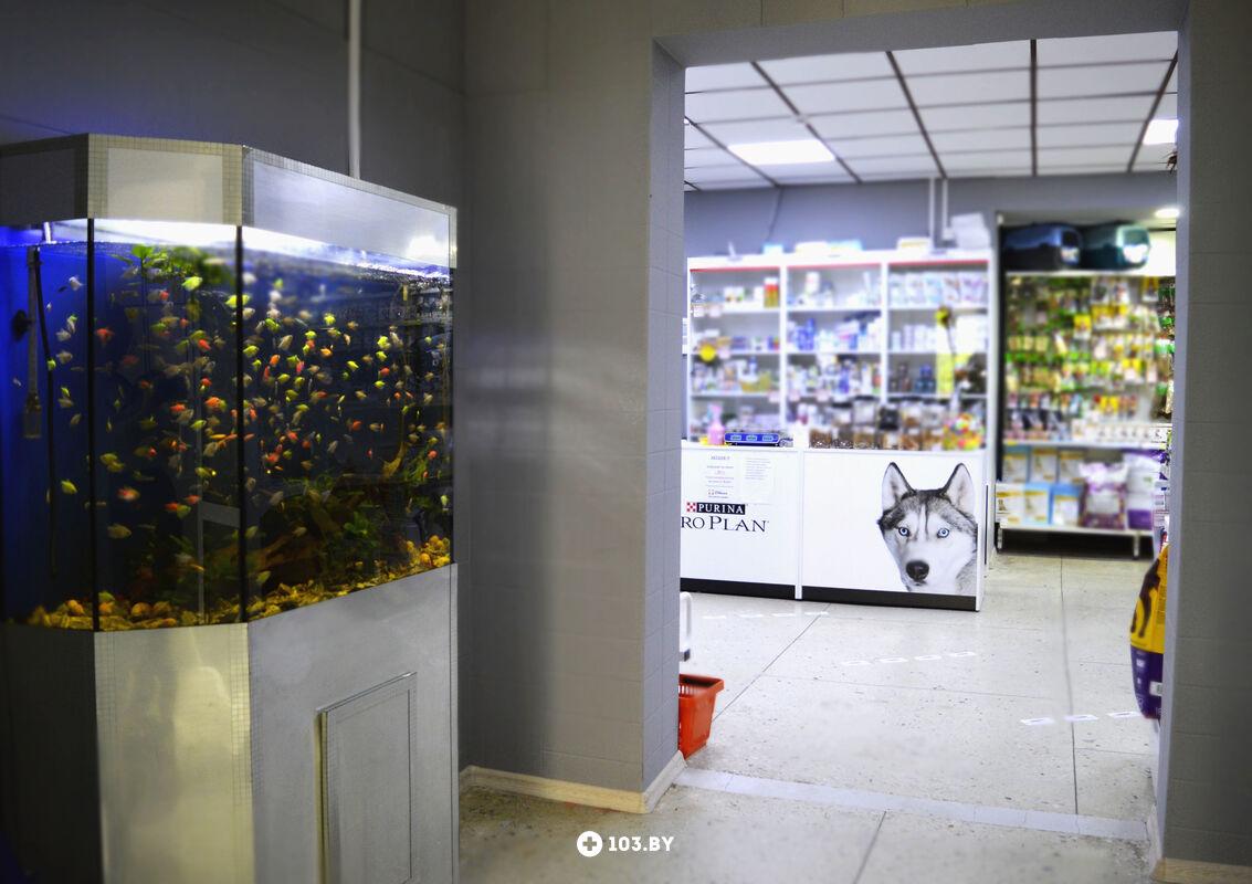 Галерея Ветеринарная клиника «Стрелка Запад» - фото 2350233